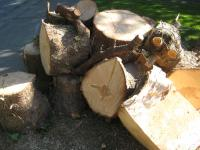 Free Softwood Firewood
